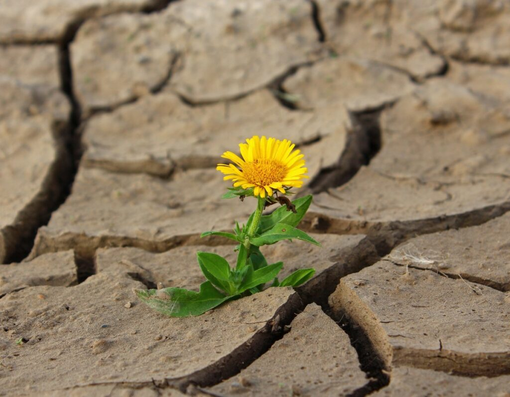 How you can learn to be resilient